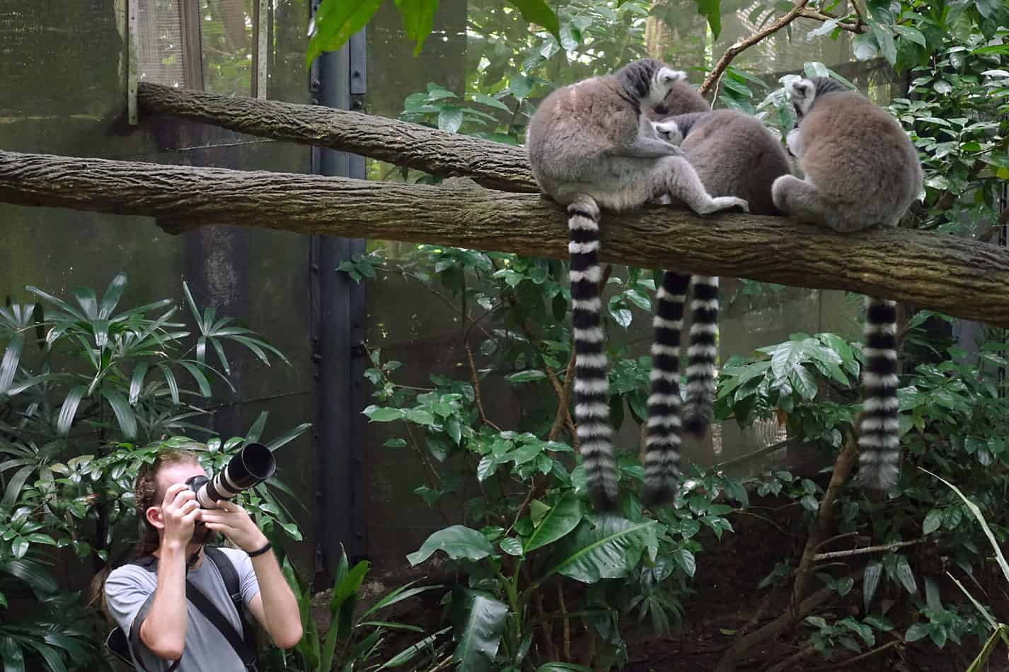 Can You Sell Photos of Zoo Animals